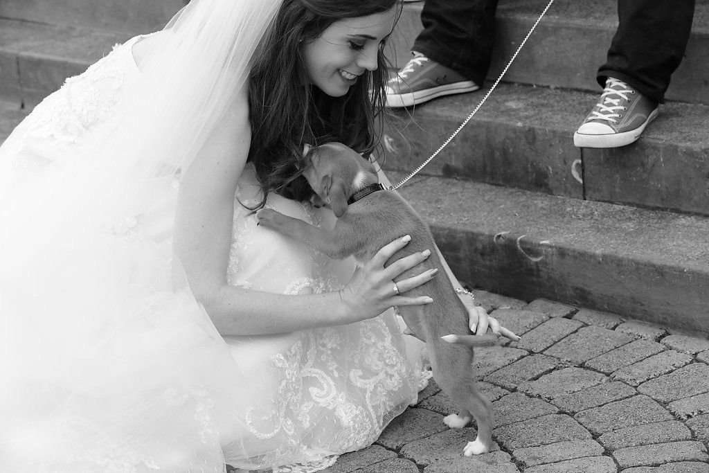 Bride meets a dog on her walk about